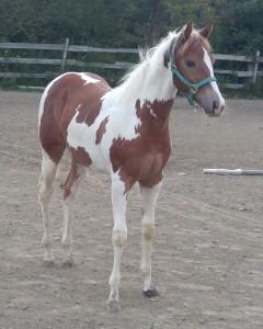 rescue horse Winnie