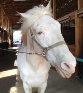 rescue horse - Kira