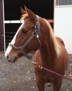 rescue horse Sahara