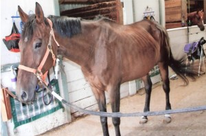 rescue horse Molly