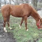 rescuing horses - Lexi