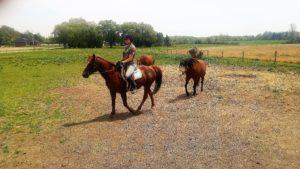 rescue horse-Pumpkin